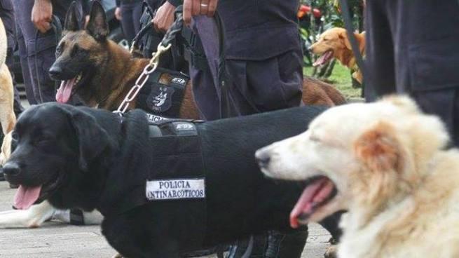 PNC rindió homenaje a perros policías que dedicaron su vida al combate del narcotráfico