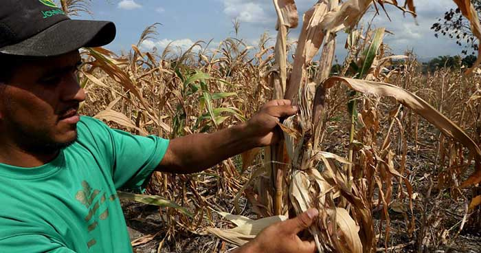 Sequía sobrepasa récord histórico en El Salvador