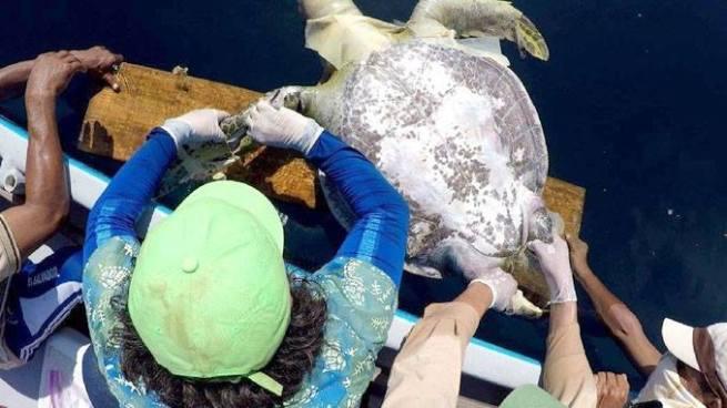 Descubren posible causa de muerte de tortugas encontradas en la Bahía de Jiquilisco