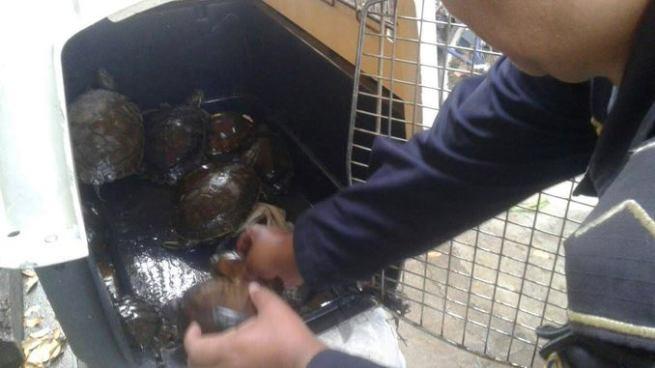 Ciudadano entrega voluntariamente 14 tortugas a la División de Medio Ambiente