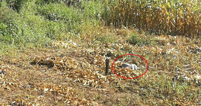 Matan a un agricultor cuando trabajaba en una milpa en San Miguel