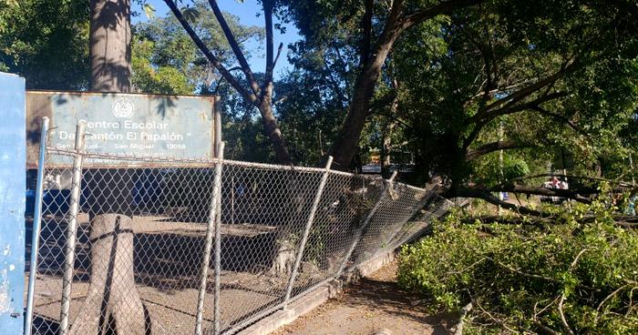 Fuerte vientos derribaron árbol en centro escolar de San Miguel