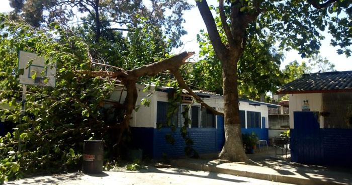 Rama de un árbol cae y daña el techo de una escuela en Sonsonate