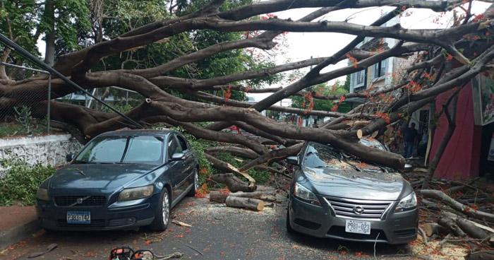Árbol de 9 metros cae sobre 2 vehículos en San Miguel