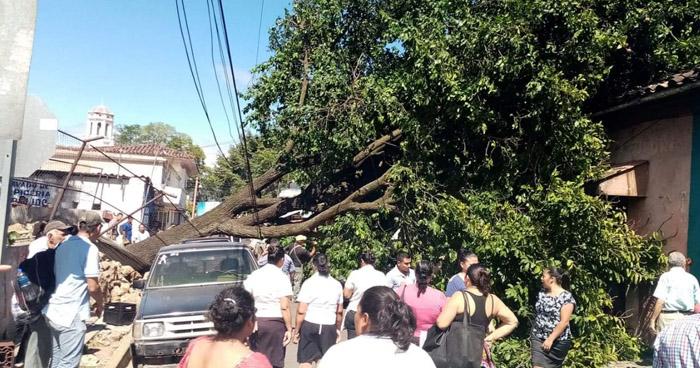 Árbol cae sobre vehículos en calle de Santa Ana
