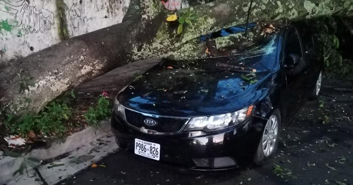 Árbol cae sobre dos vehículos en colonia de Santa Ana