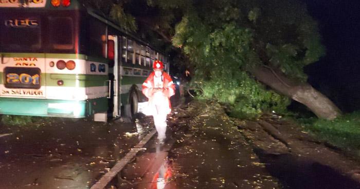 Árbol cae sobre autobús interdepartamental en carretera Panamericana