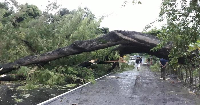 Árboles caídos afectan tránsito en varios kilómetros de la carretera Litoral y otras vías