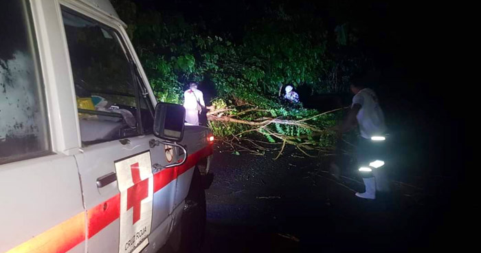 Ocho árboles cayeron tras fuerte lluvia con viento registrada anoche en distintos puntos del país