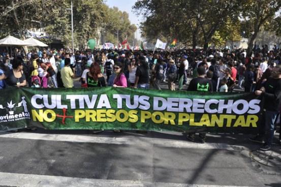 Chilenos marchan por la legalización del autocultivo de la marihuana