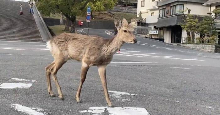 Ante la ausencia de humanos, animales se apoderan de las calles y playas