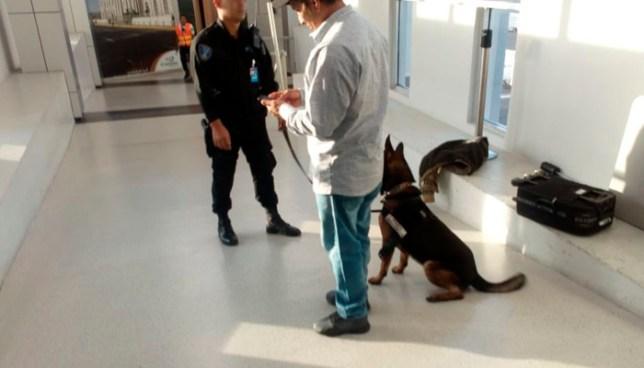 Colombiano detenido en aeropuerto internacional por transportar cocaína en su ropa interior