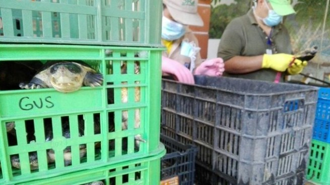 Detienen a propietario de vivero de tortugas en La Paz por depredación de fauna protegida