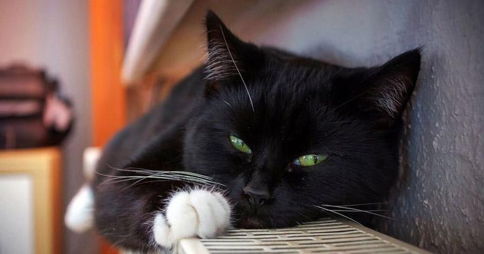 Detectan primer caso de COVID-19 en un gato en España