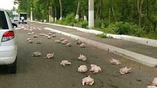 Imagen de pollos caídos de un camión en carretera a Juayua es Falsa