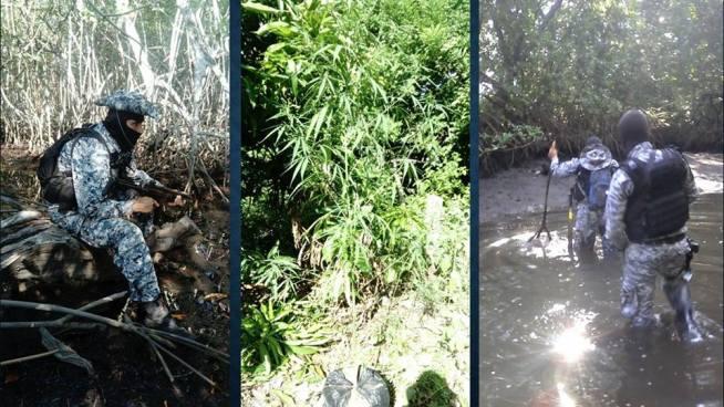 Buscaban a víctima privada de libertad terminan encontrando plantación de marihuana en Conchagua