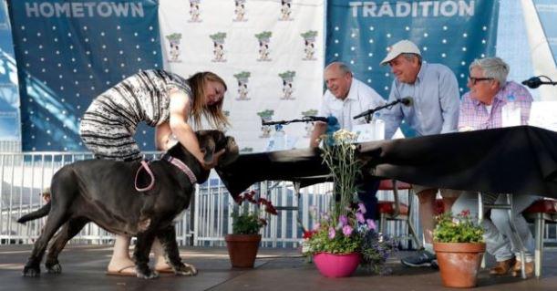 """El perro """"más feo del mundo"""" gana $1,500 dólares y un viaje a Nueva York"""