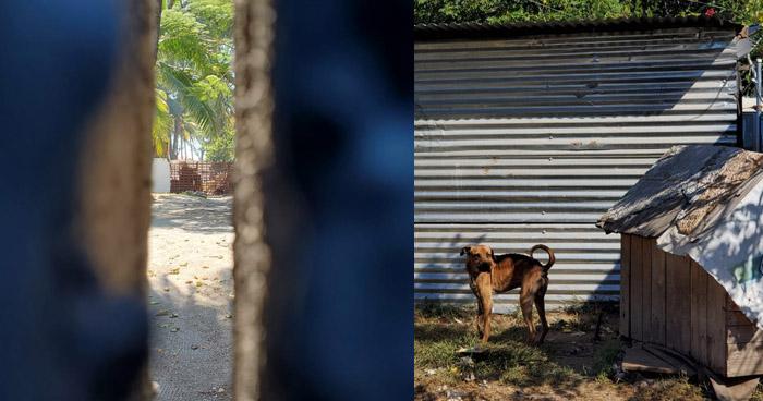 Investigan caso de brutal asesinato de perros en rancho de playa en la Costa del Sol