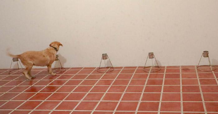 El Salvador implementará perros para detectar COVID-19
