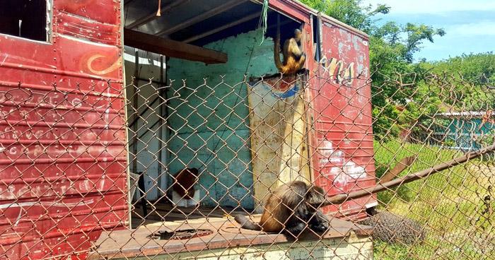 Rescatan a monos arañas que fueron abandonados en un vagón en La Unión
