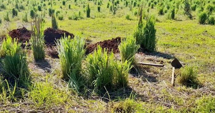 Dos cadáveres semi enterrados fueron encontrados esta mañana, en Pasaquina, La Unión