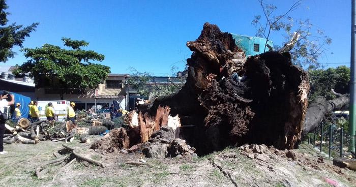 Árbol cayó en parque Centenario de San Salvador