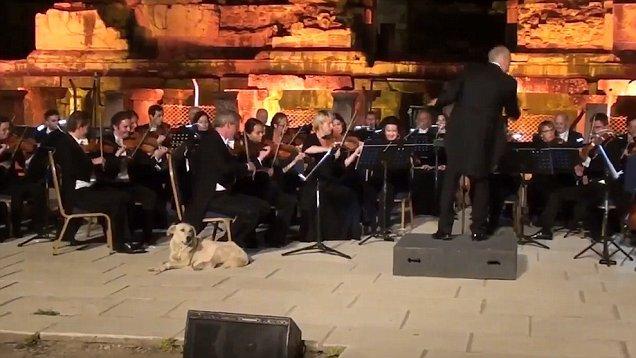 VÍDEO   Un perro se coló en un concierto de música clásica