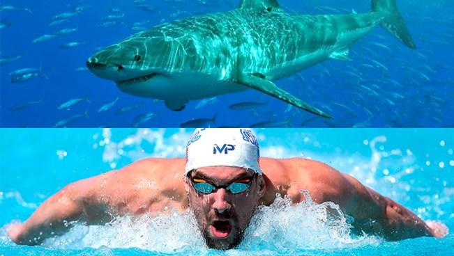 Michael Phelps competirá contra un tiburón blanco
