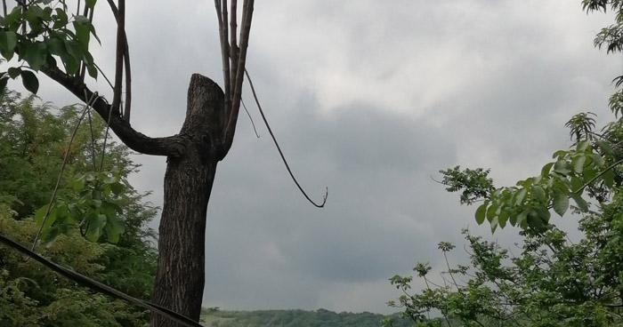 Onda Tropical influenciará aumento de nubosidad y lluvias sobre el territorio nacional