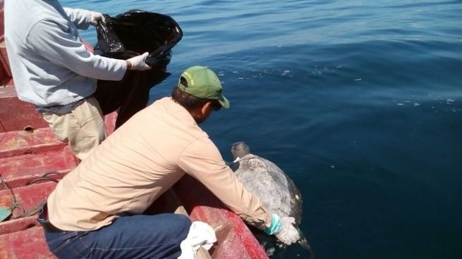 Encuentran más de 300 tortugas marinas muertas en aguas de la Bahía de Jisquilisco