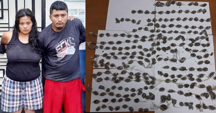 Incautan 200 porciones de marihuana a traficantes que operaban en Cuscatlán