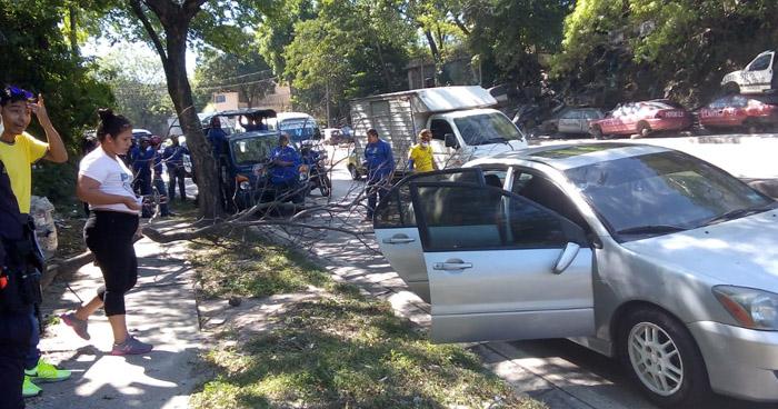 Rama de un árbol cae sobre vehículo en carretera Troncal del Norte