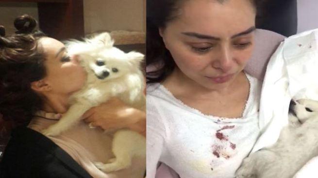 Califican de 'ridícula' a Yadhira Carrillo por llorar la muerte de su mascota en un vídeo
