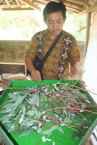 haryanto-salah-sijine-tim-riset-nduduhake-uler-sutra-ron-pohong