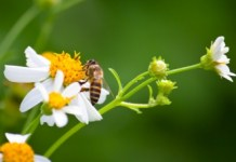 consejos-alergia-polen