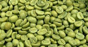 Cómo perder peso gracias al café verde natural
