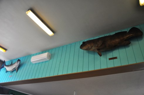 Tarpon and Goliath Grouper Once in Flamingo Restaurant Lounge Now in Flamingo Visitor Center