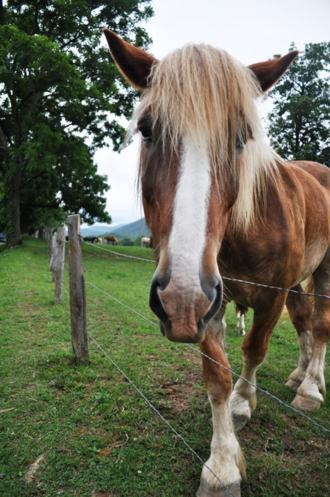 Horse is a Horse... Cades Cove Loop Road, Great Smoky Mountains National Park