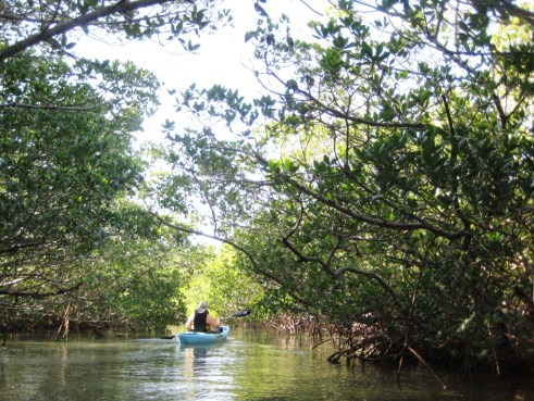 Kayaking through Charlotte County's Mangrove Tunnels is a Cool Thing to Do