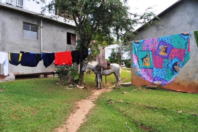 A Horse Rests at Parada Basilio y Ramona, El Limón, Samaná