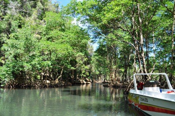 Boat Dock at Los Haitises National Park Caves