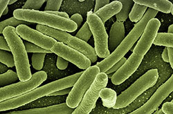 Solution Ozone About Ozone Effect Pathogens Escherichia Coli Bacteria Image
