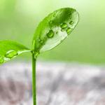 Azure, Google Cloud : qui est le plus vert ?