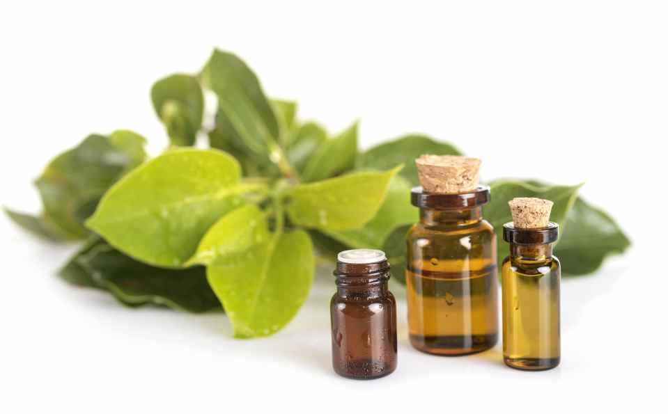 Huile essentielle Ravintsara_Solutions santé naturelle