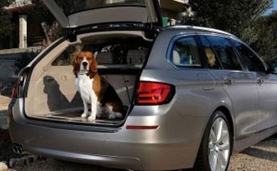 auto cane