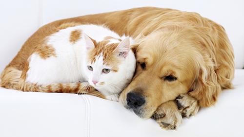 cane gatto forfora