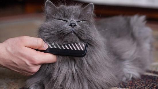 pettinare gatto