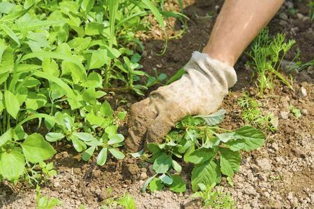 Come eliminare le erbacce dal giardino