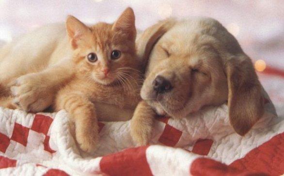 Vacanze ed animali domestici