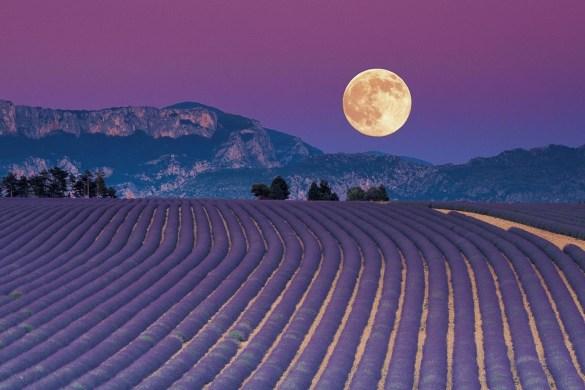 La semina e le fasi lunari